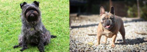 Affenpinscher vs French Bulldog