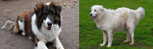 Aidi vs Abruzzenhund