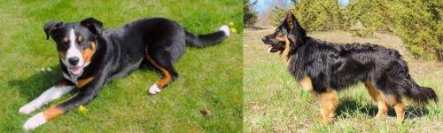Appenzell Mountain Dog vs Bohemian Shepherd