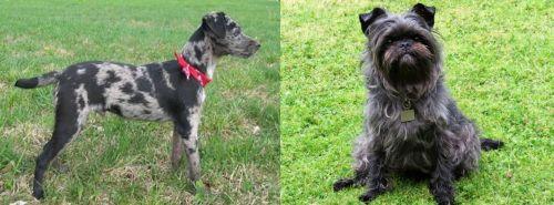 Atlas Terrier vs Affenpinscher