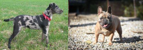 Atlas Terrier vs French Bulldog