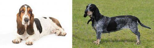 Basset Hound vs Basset Bleu de Gascogne