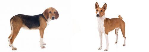 Beagle-Harrier vs Basenji