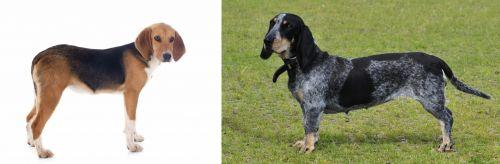 Beagle-Harrier vs Basset Bleu de Gascogne