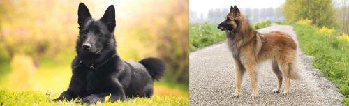 Black Norwegian Elkhound vs Belgian Shepherd Dog (Tervuren)