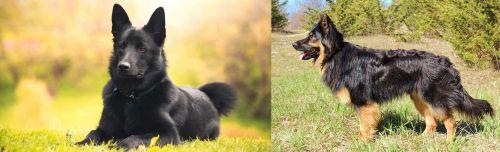Black Norwegian Elkhound vs Bohemian Shepherd