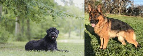 Bouvier des Flandres vs German Shepherd