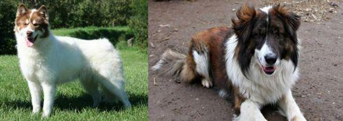 Canadian Eskimo Dog vs Aidi