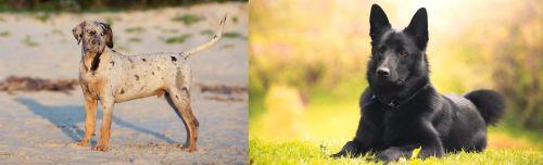 Catahoula Cur vs Black Norwegian Elkhound
