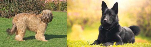 Catalan Sheepdog vs Black Norwegian Elkhound