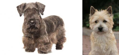 Cesky Terrier vs Cairn Terrier