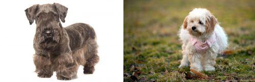 Cesky Terrier vs West Highland White Terrier