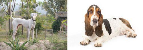 Chippiparai vs Basset Hound