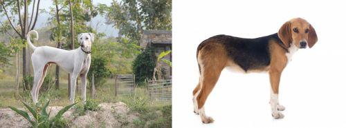 Chippiparai vs Beagle-Harrier