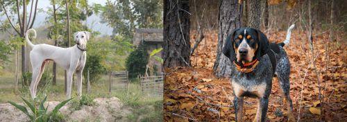 Chippiparai vs Bluetick Coonhound
