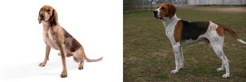 Coonhound vs Anglo-Francais de Petite Venerie