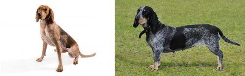 Coonhound vs Basset Bleu de Gascogne