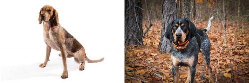 Coonhound vs Bluetick Coonhound