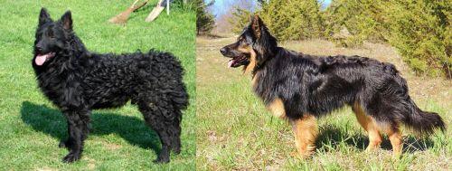 Croatian Sheepdog vs Bohemian Shepherd
