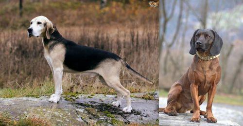 Dunker vs Bavarian Mountain Hound