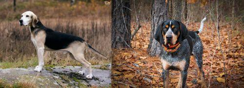 Dunker vs Bluetick Coonhound