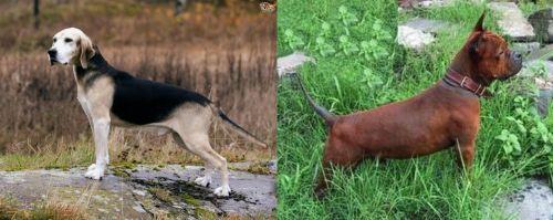 Dunker vs Chinese Chongqing Dog