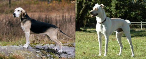 Dunker vs Cretan Hound