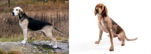 Dunker vs English Coonhound