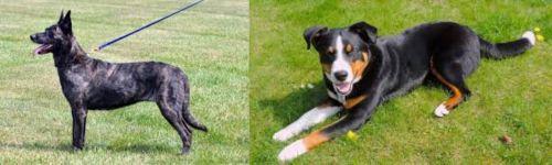 Dutch Shepherd vs Appenzell Mountain Dog