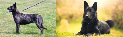 Dutch Shepherd vs Black Norwegian Elkhound