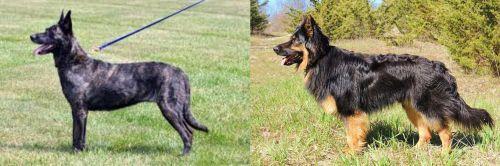Dutch Shepherd vs Bohemian Shepherd