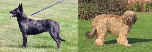 Dutch Shepherd vs Catalan Sheepdog