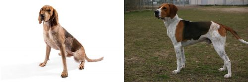 English Coonhound vs Anglo-Francais de Petite Venerie