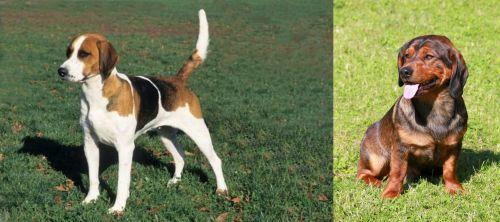 English Foxhound vs Alpine Dachsbracke