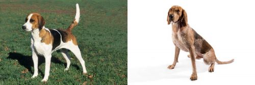 English Foxhound vs Coonhound