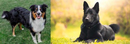 English Shepherd vs Black Norwegian Elkhound