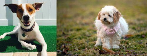 Feist vs West Highland White Terrier