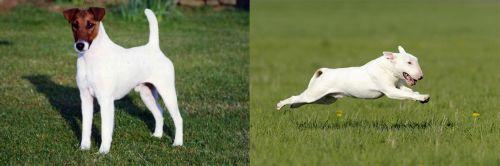 Fox Terrier (Smooth) vs Bull Terrier