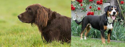 German Longhaired Pointer vs Entlebucher Mountain Dog