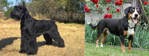 Giant Schnauzer vs Entlebucher Mountain Dog