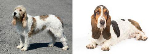 Grand Basset Griffon Vendeen vs Basset Hound
