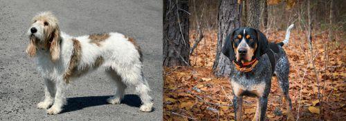 Grand Basset Griffon Vendeen vs Bluetick Coonhound