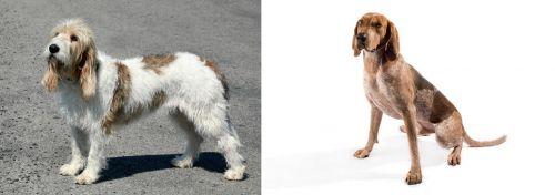 Grand Basset Griffon Vendeen vs English Coonhound