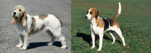 Grand Basset Griffon Vendeen vs English Foxhound