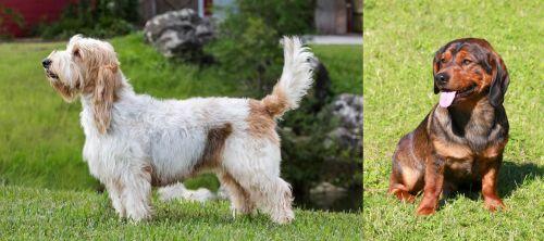 Grand Griffon Vendeen vs Alpine Dachsbracke