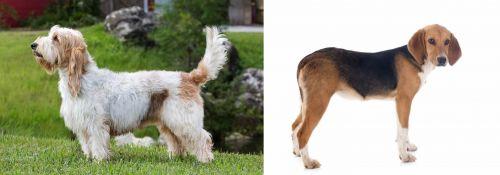 Grand Griffon Vendeen vs Beagle-Harrier