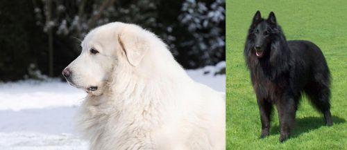 Great Pyrenees vs Belgian Shepherd Dog (Groenendael)