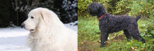 Great Pyrenees vs Black Russian Terrier