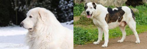 Great Pyrenees vs Central Asian Shepherd