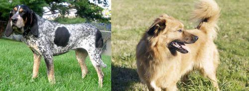 Griffon Bleu de Gascogne vs Basque Shepherd